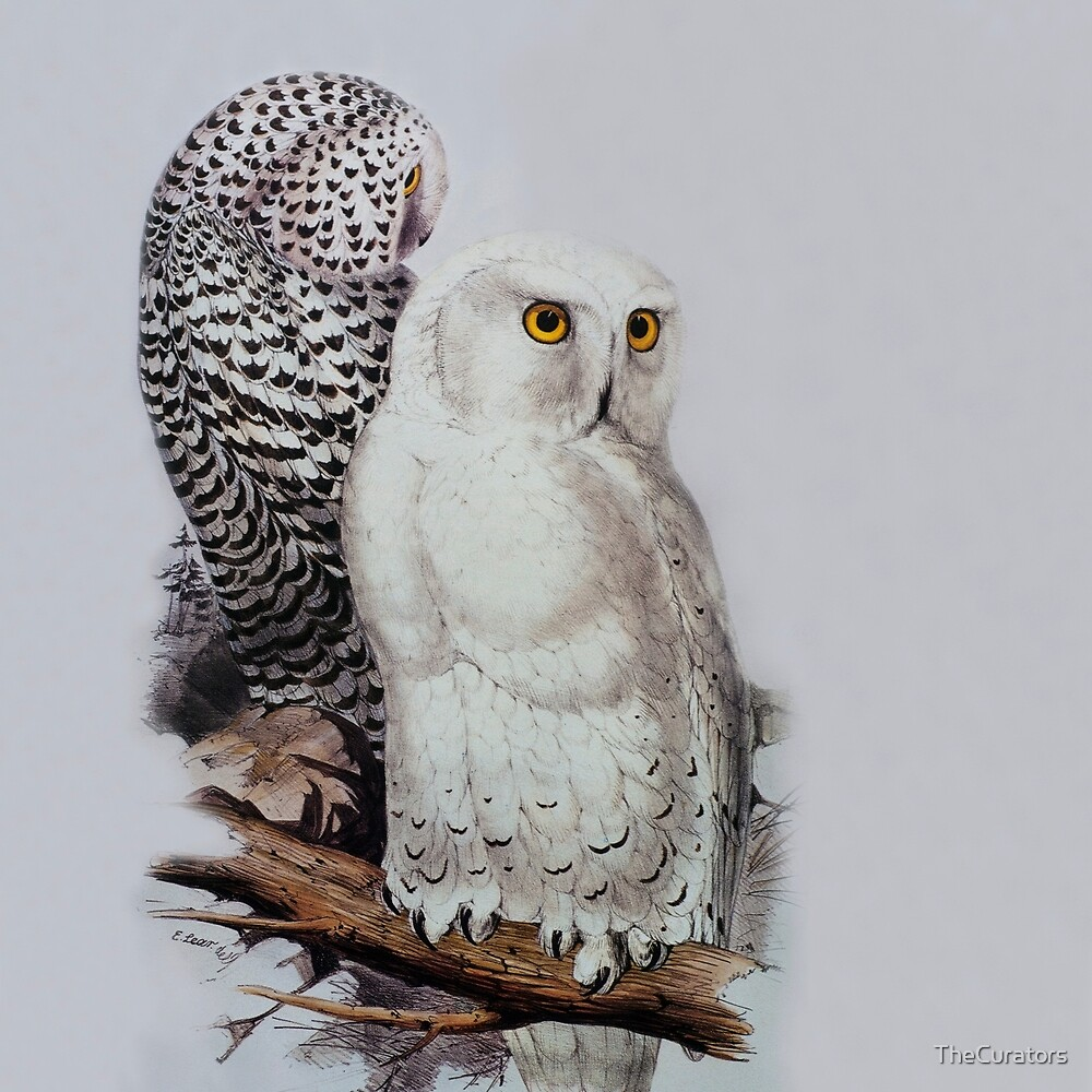 Edward Lear - Snowy Owls by TheCurators