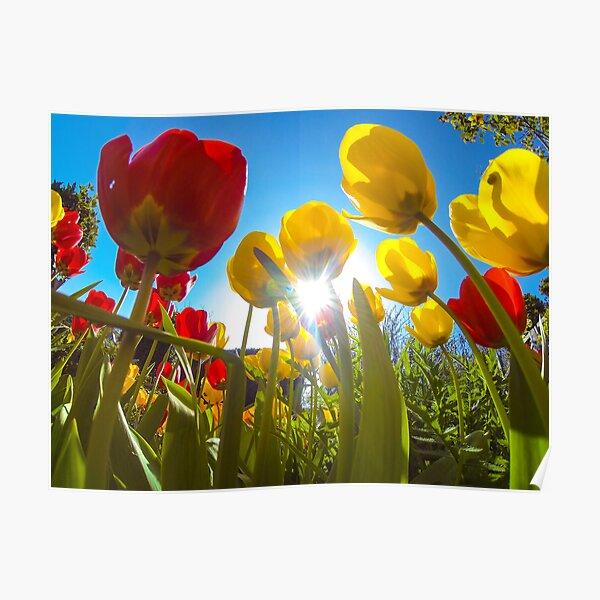 Exploring the garden on a sunny day Poster