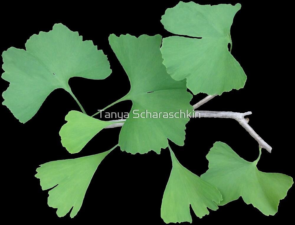 Ginkgo Leafy Branch   by CraftyTiger