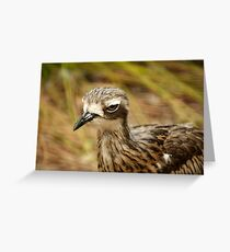 Bush Stone-curlew Greeting Card