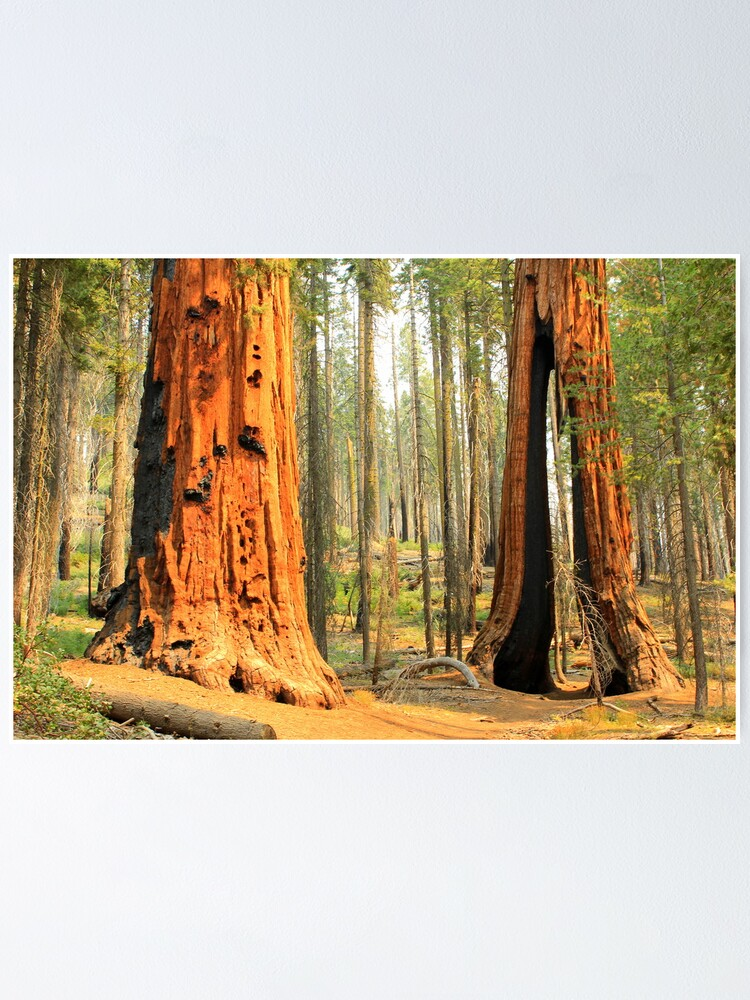 Sequoia National Park  wall poster house California
