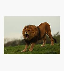 Roar Photographic Print
