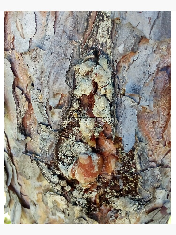log up close 4 by CosmosJester