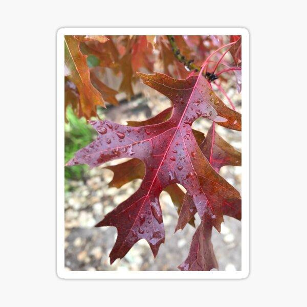Raindrop Fall Leaves Sticker