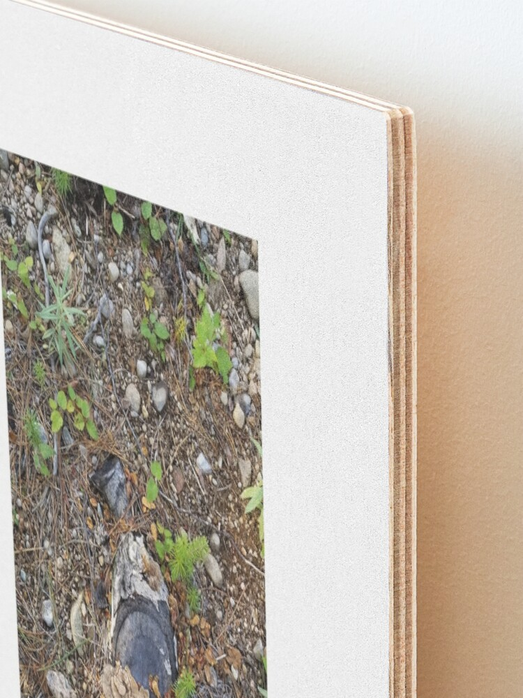 Alternate view of Boreal forest floor 1 Mounted Print