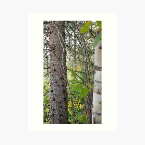 Boreal forest 4 Art Print