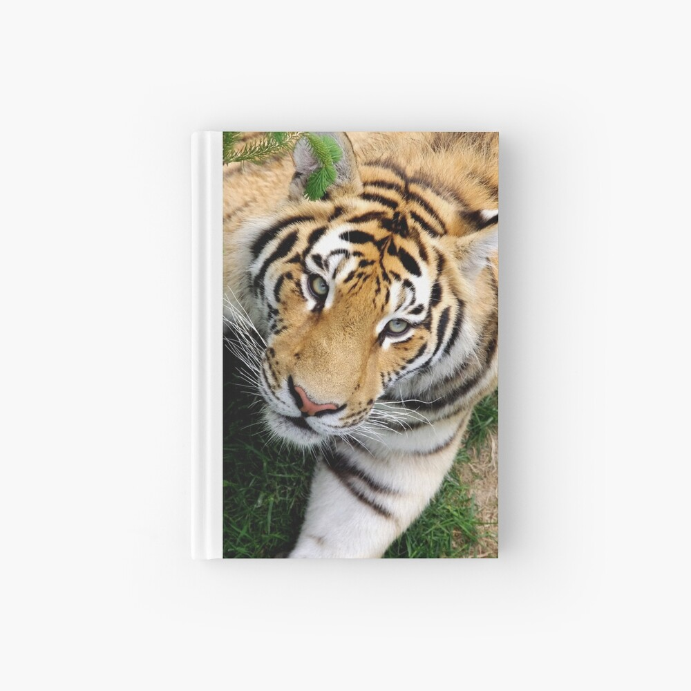Chilling tiger Hardcover Journal