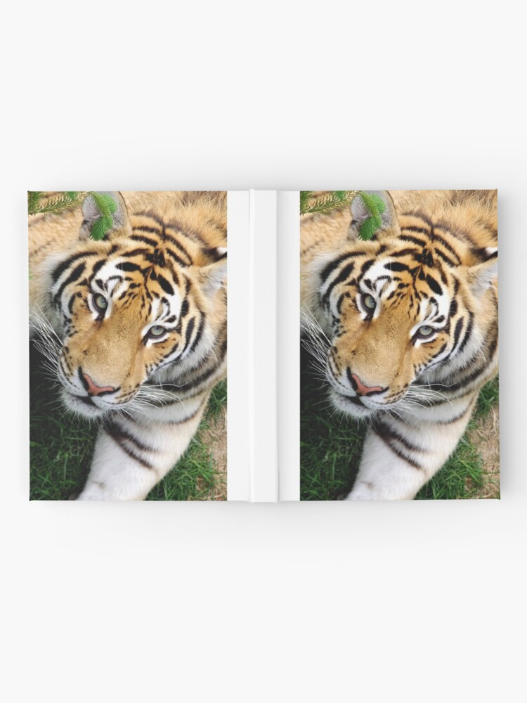 Alternate view of Chilling tiger Hardcover Journal