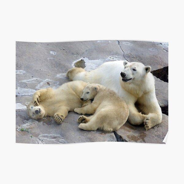 Happy nappy polar bear family Poster