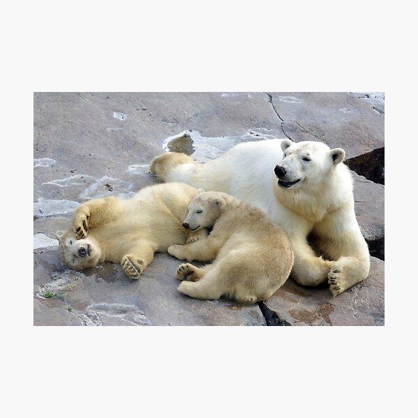 Happy nappy polar bear family Photographic Print