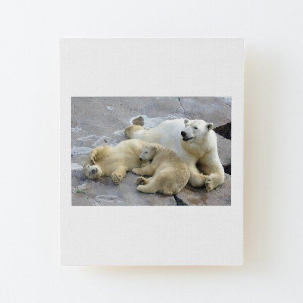 Happy nappy polar bear family Wood Mounted Print