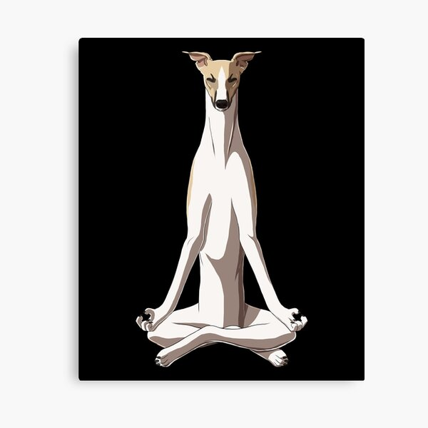 Meditating Whippet Dog Canvas Print