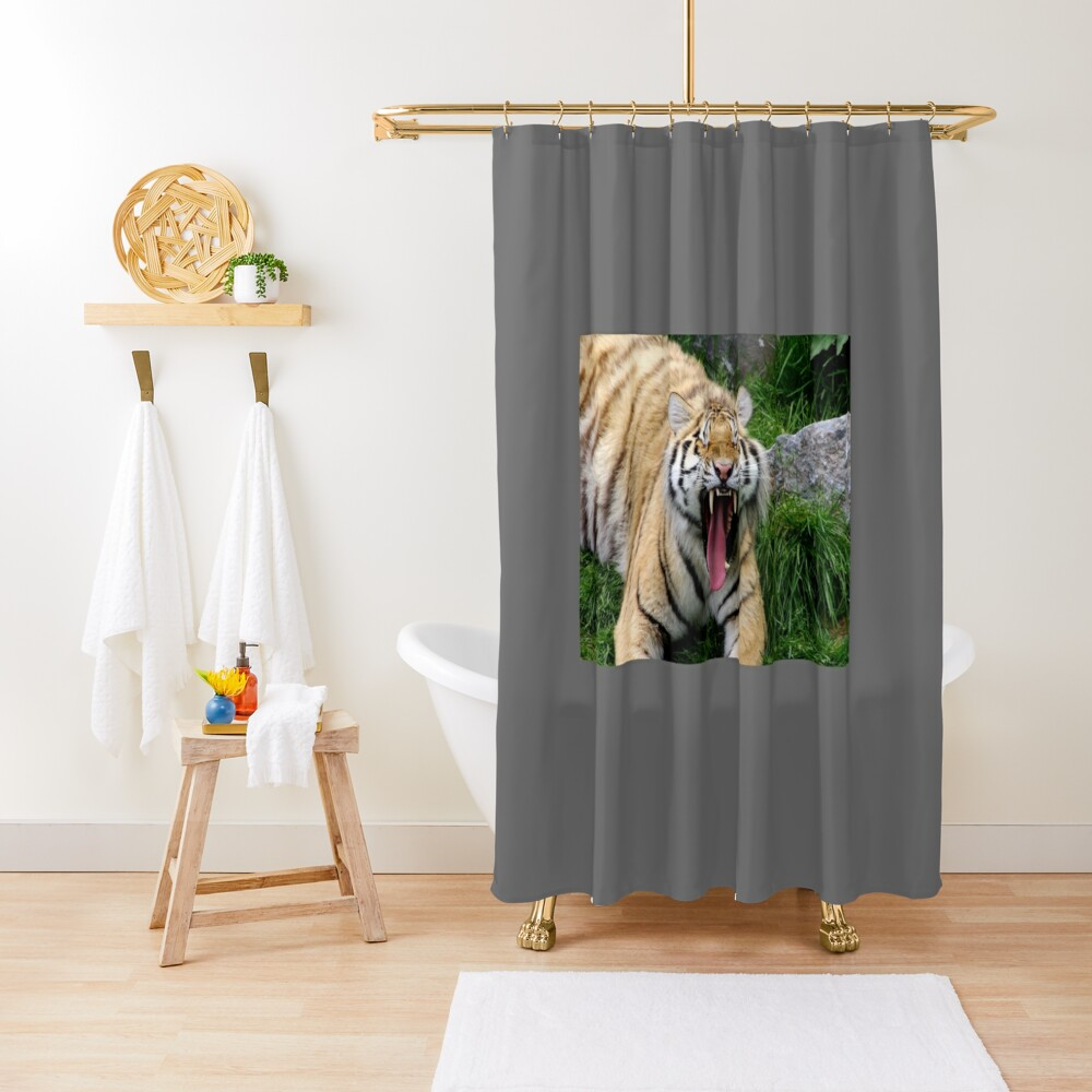 yawning tiger 1 Shower Curtain