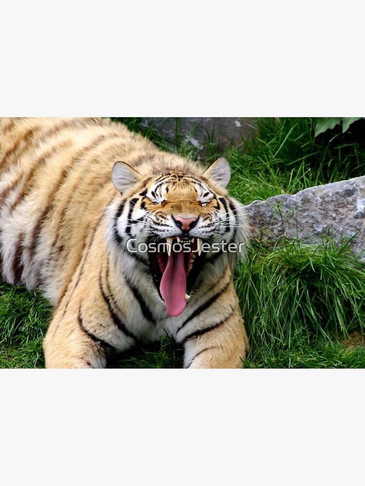 yawning tiger 1 by CosmosJester