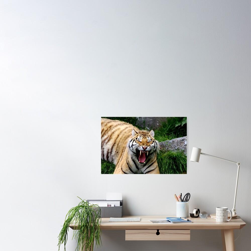 Yawning tiger 2 Poster