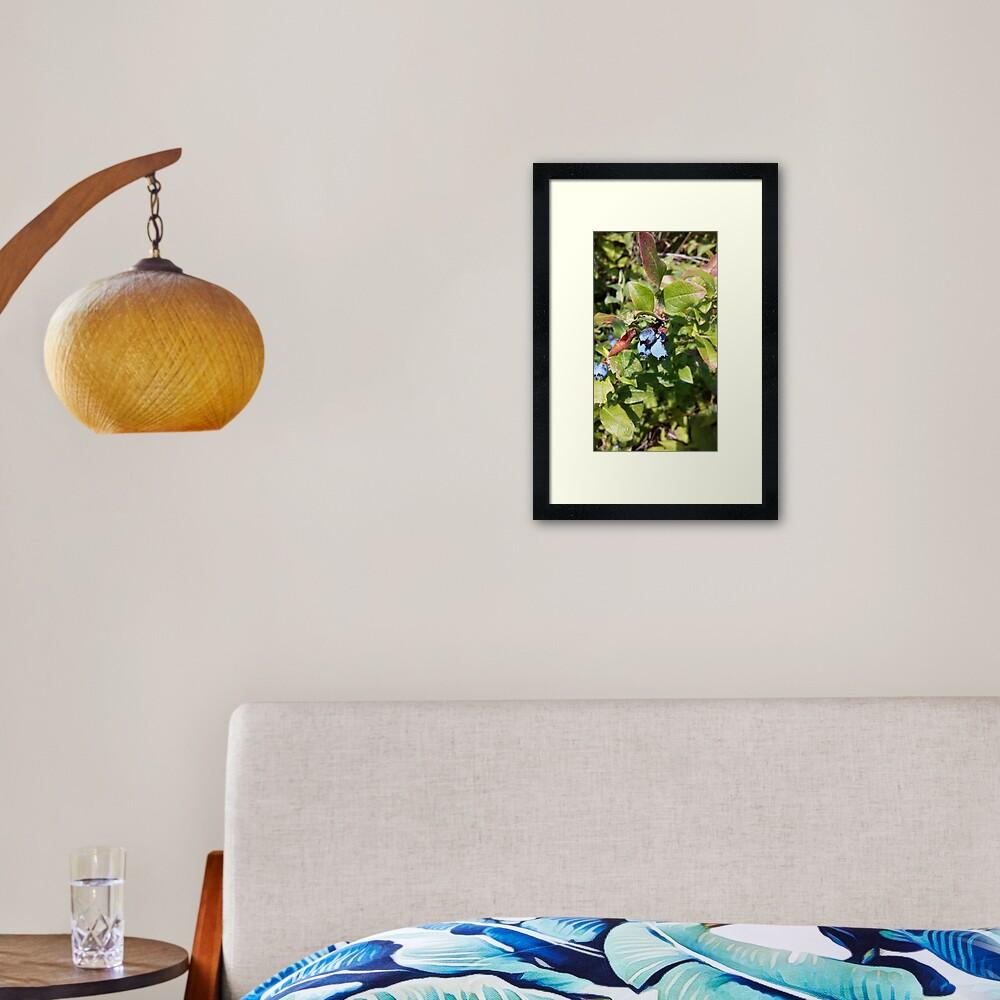Blueberries past their prime Framed Art Print