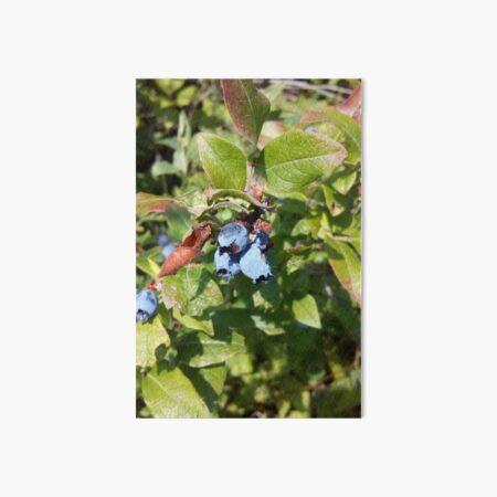 Blueberries past their prime Art Board Print