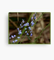 Forget Me Not (Olive) Canvas Print