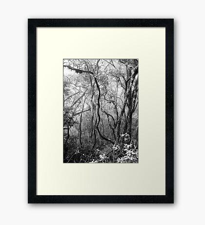 Rainforest No.8 Framed Print