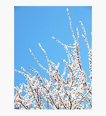 Blossoms Up Photographic Print