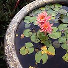 Water Lily by Adria Bryant