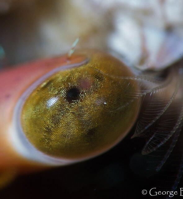 Hermit Eye by George Borovskis