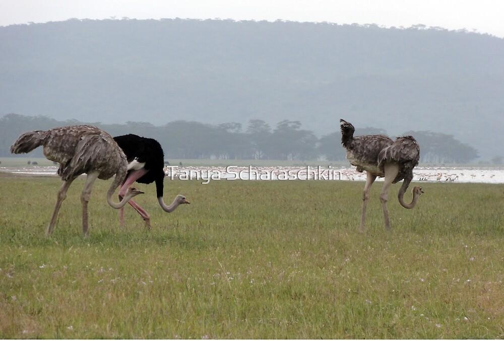 Ostriches by CraftyTiger