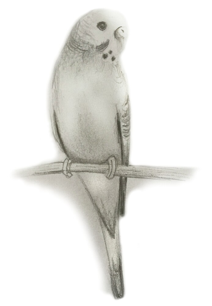 budgie on a branch by SherylGS