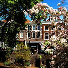 Spring blossoms at Utrecht by jchanders
