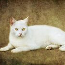 mr. white by lucyliu
