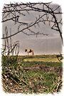 Harlow Common Pony by Nigel Bangert