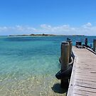 Pier for the ferry to Penguin Island in Perth by looneyatoms