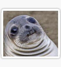 Fat seal sticker Sticker