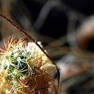 ©NS Small Thorns IA by OmarHernandez