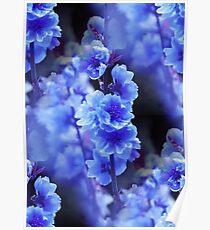 Blue Delphinium Poster
