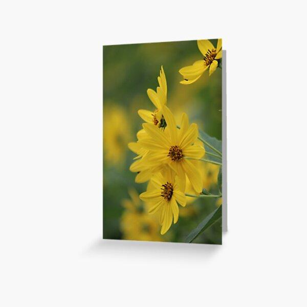 Yellow Daisey Greeting Card