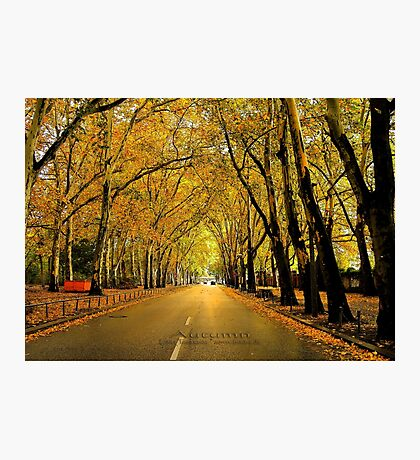 autumn avenue Photographic Print