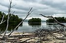 Swamp Island from Cayo Levisa by MarcW