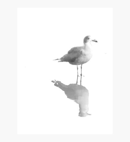 Gull and Reflections in Black and White Photographic Print