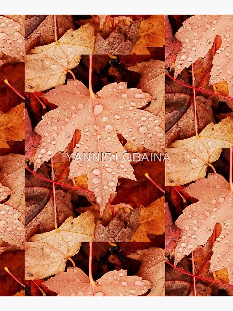 Enchanting  Autumn arriving soon  by Yannis Lobaina by lobaina1979