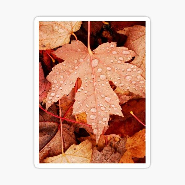 Enchanting  Autumn arriving soon  by Yannis Lobaina Sticker
