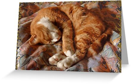 Thomas, Sleeping by Jay Taylor