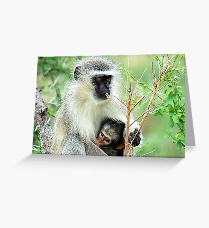 MOTHER LOVE - THE VERVET MONKEY - Cercopithecus aethiops - Blou-aap Greeting Card