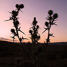 Thistle's At Dusk No.1 by Erin Davis