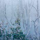 Snow gum regrowth by Vicki Moritz