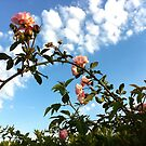 Roses in the Sky by takis52