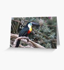 Channel-billed Toucan  (Ramphastos vittellinus) Greeting Card