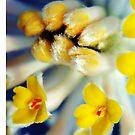 Fuzzy Flowers by Scott Mitchell