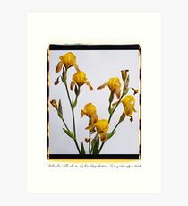 Polacolor Floral 10, Reproduction Art Print