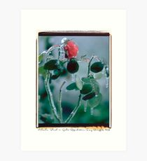 Polacolor Floral 11, Reproduction Art Print